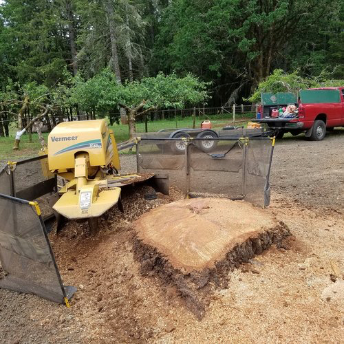 Tree Stump Grinding with Salem Tree Service