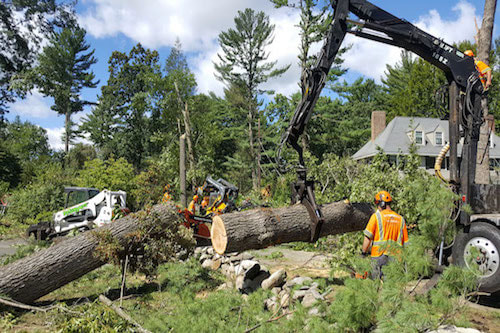 Tree service work in Salem, OR
