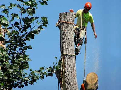 Salem Tree Service  - Tree Removals