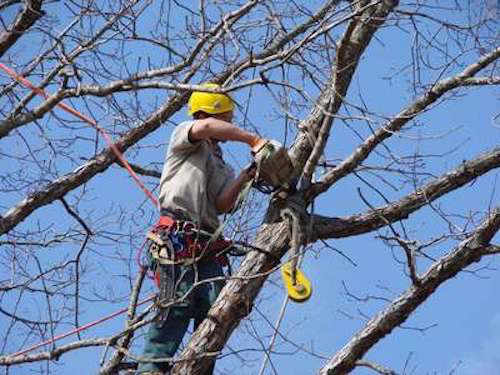 Tree Trimming in Salem OR