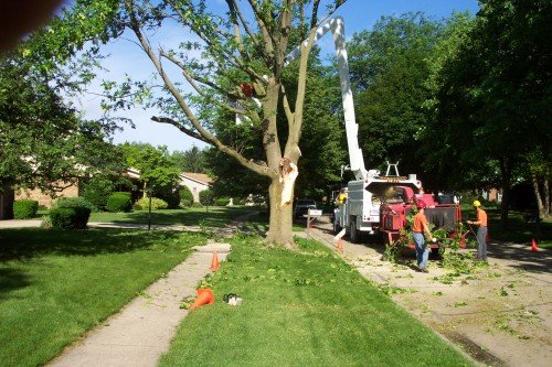 Tree Removal, Salem OR